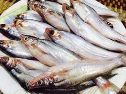 ばたし魚(450Gm)